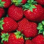 Strawberries, June Berries, Everbearing or Day-Neutral